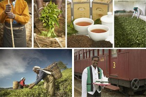 Sri Lanka : Tea Factory